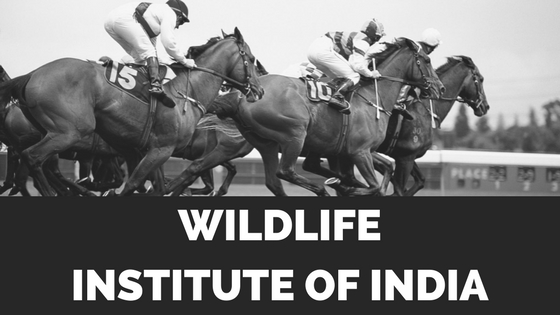Wildlife Institute of India Recruitment